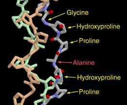 collagene